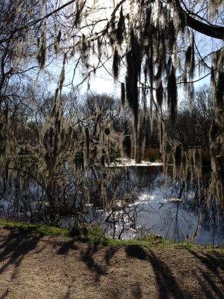 swamp pic